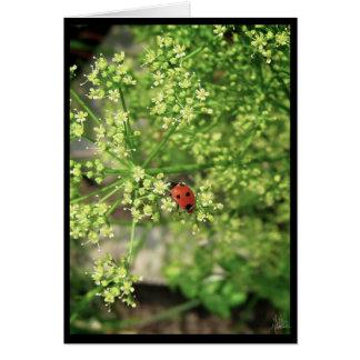 Ladybird [Greeting Card] Card
