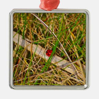 Ladybird in the grass picture Silver-Colored square ornament