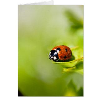 Ladybird On A Horthorn Bush - Spring Ladybird - Bl Card