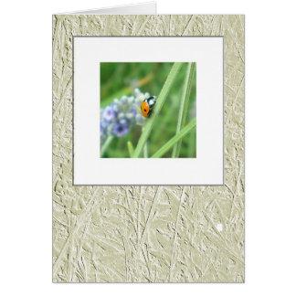 Ladybird on a stalk card
