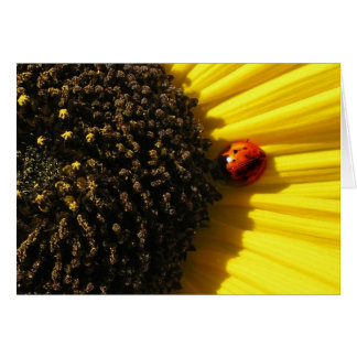 Ladybird on a sunflower card
