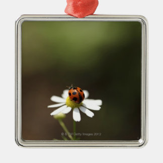 Ladybird on Chamomile Flower Silver-Colored Square Ornament