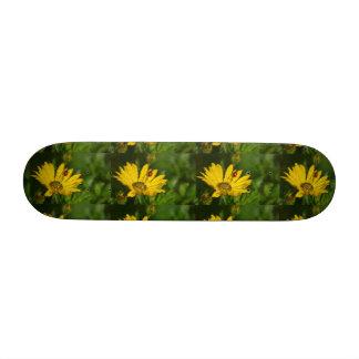 Ladybird on yellow Gazaniablüte, close-up, Skateboard Decks