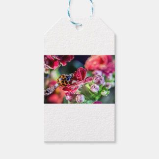 Ladybird Pack Of Gift Tags