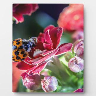 Ladybird Plaque