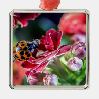 Ladybird Silver-Colored Square Ornament