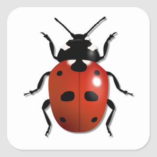 Ladybird Square Sticker