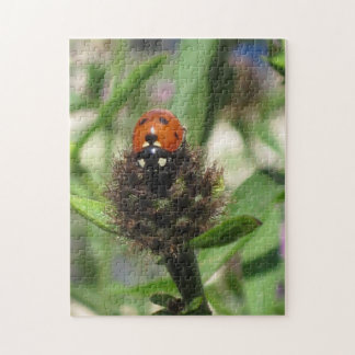 Ladybird Sturdy Chipboard Mounted Puzzles