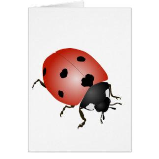 Ladybird - talismans card