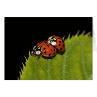 Ladybirds Blank Greeting Card and Envelope