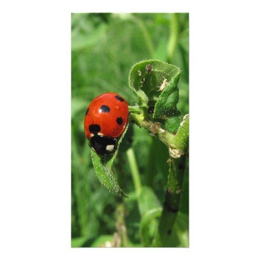 Ladybug and Aphids Custom Photo Card