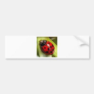 ladybug bumper sticker