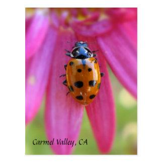 Ladybug Carmel Valley, CA Postcard