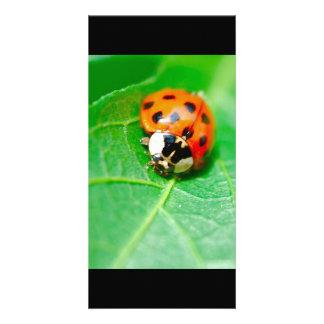 ladybug custom photo card