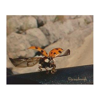 "LadyBug ""Flight"" jjhelene Wood Wall Art"