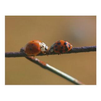 Ladybug Friends Nature Photography Postcard