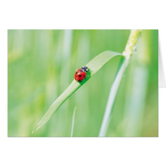 Ladybug in the Grass Card
