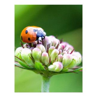 ladybug letterhead