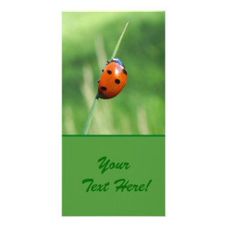 Ladybug on a blade of grass picture card