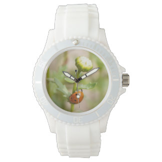 Ladybug on a Daisy Bud Watch