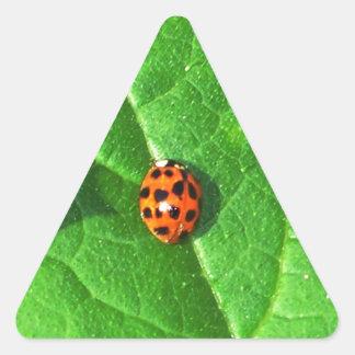 Ladybug On A Squash leaf Triangle Sticker