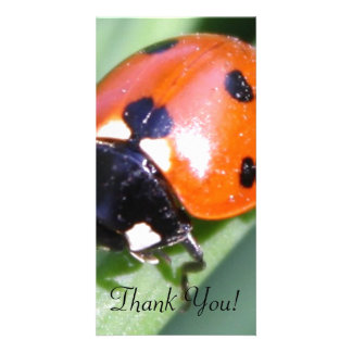 Ladybug on Blade of Grass Photo Card Template