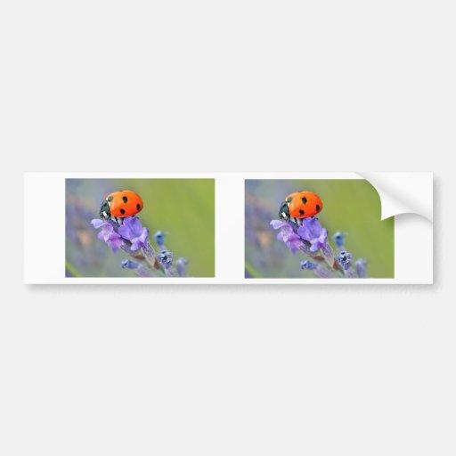 Ladybug on lavender flower bumper stickers