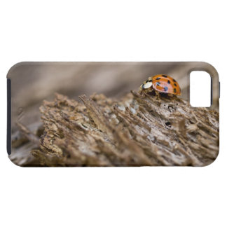 Ladybug on old wood, Apalachicola Bluffs and iPhone 5 Cover