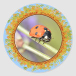 Ladybug on stem of lavender flower in frame of lea round stickers