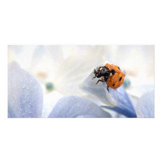 Ladybug Photo Greeting Card