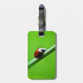 Ladybug photo luggage tag