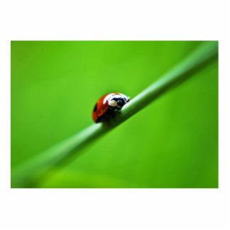 Ladybug photo standing photo sculpture