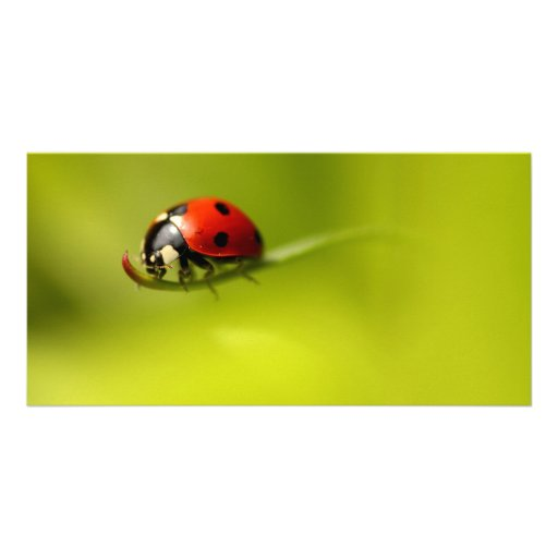 Ladybug Picture Card