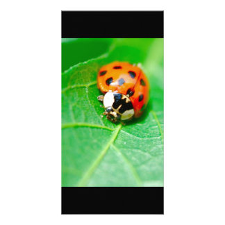 ladybug photo card template