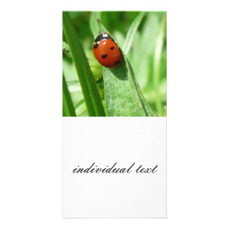 ladybug personalized photo card