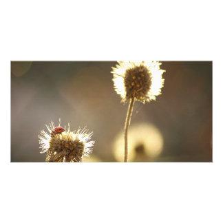 Ladybug photocard personalized photo card