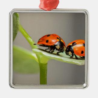 ladybugs Silver-Colored square ornament