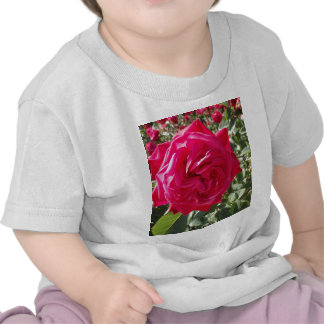Lady's Heart T-shirt