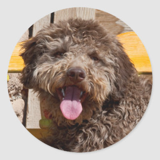 Lagotto Romagnolo Lying On A Wooden Bench Classic Round Sticker