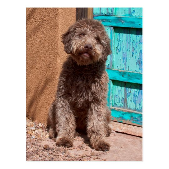 Lagotto Romagnolo Waiting By A Blue Door Postcard
