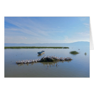 Lake Chapala Pelicans Card