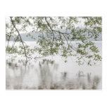Lake Crescent   Olympic National Park, WA Postcard