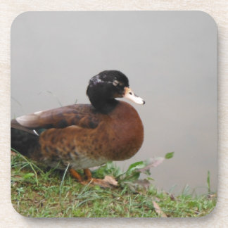 Lake Duck Photography Wildlife Nature Drink Coaster