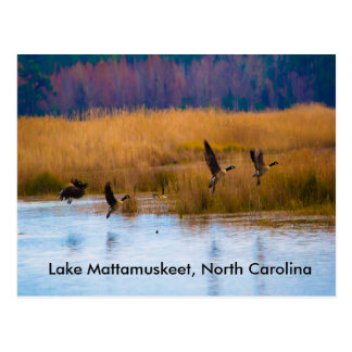 Lake Mattamuskeet Flying Geese Postcard