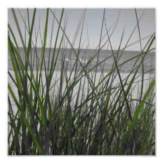 Lake Michigan behind grass Poster