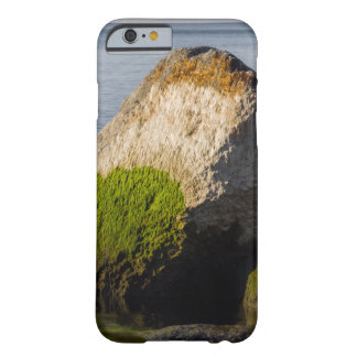 Lake Ontario Shore Phone Case