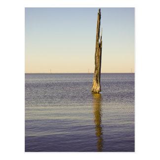 Lake Pontchartrain Cypress Tree Post Card