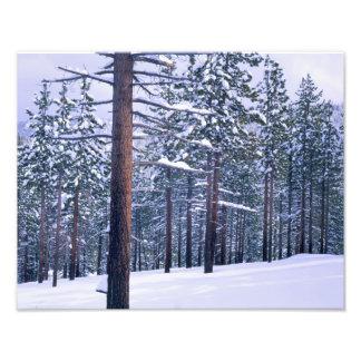 LAKE TAHOE STATE PARK, NEVADA. USA. Fresh snow Photographic Print
