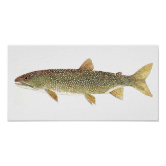 Lake Trout Watercolor Print