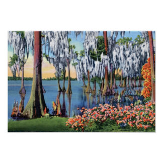 Lake Wales Florida Cypress Swamp Poster
